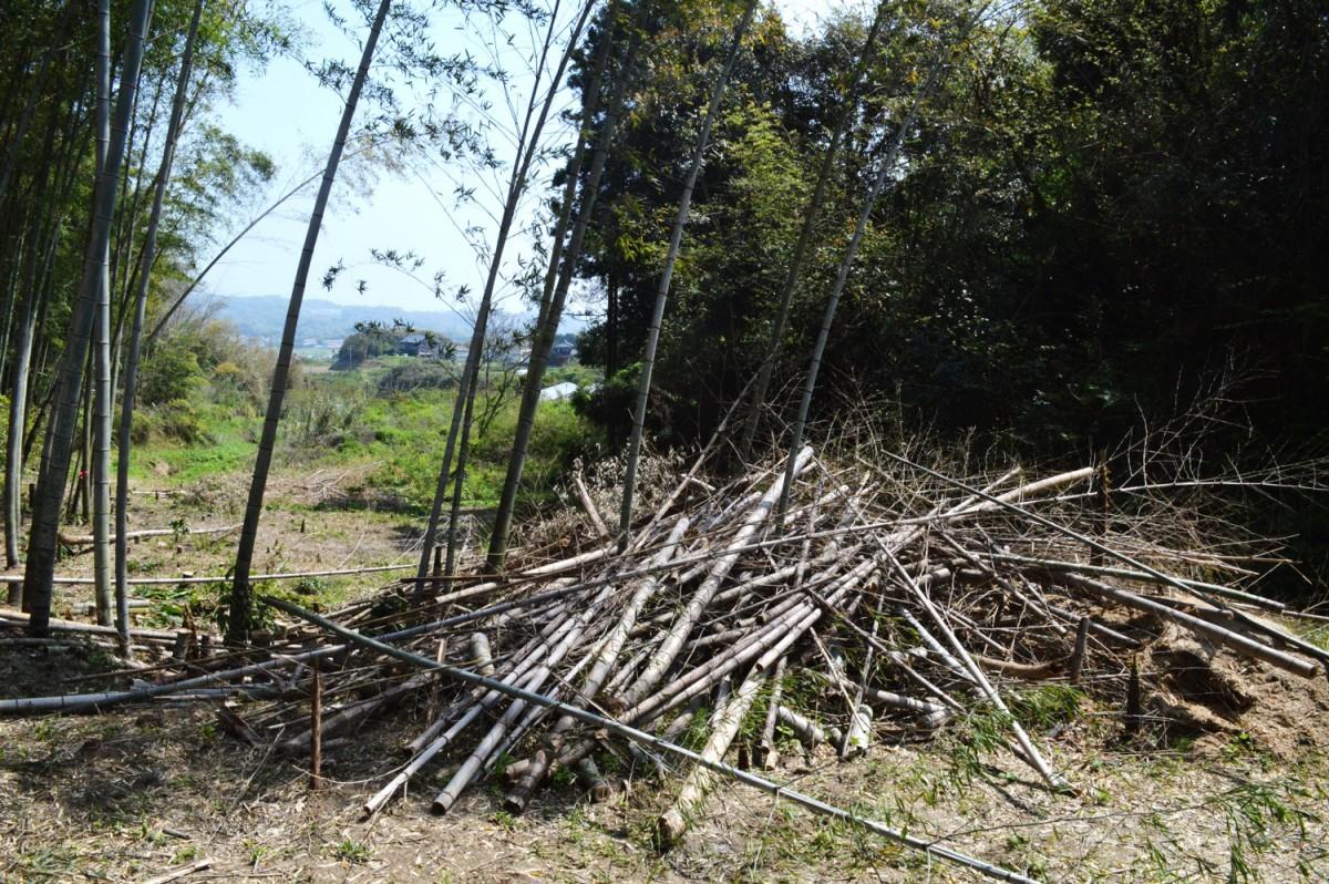 タケノコ竹林整備